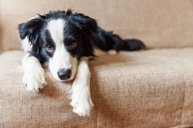 Har du styr på alt inden for pelspleje til hund?